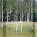 photographic continuity, extensions series